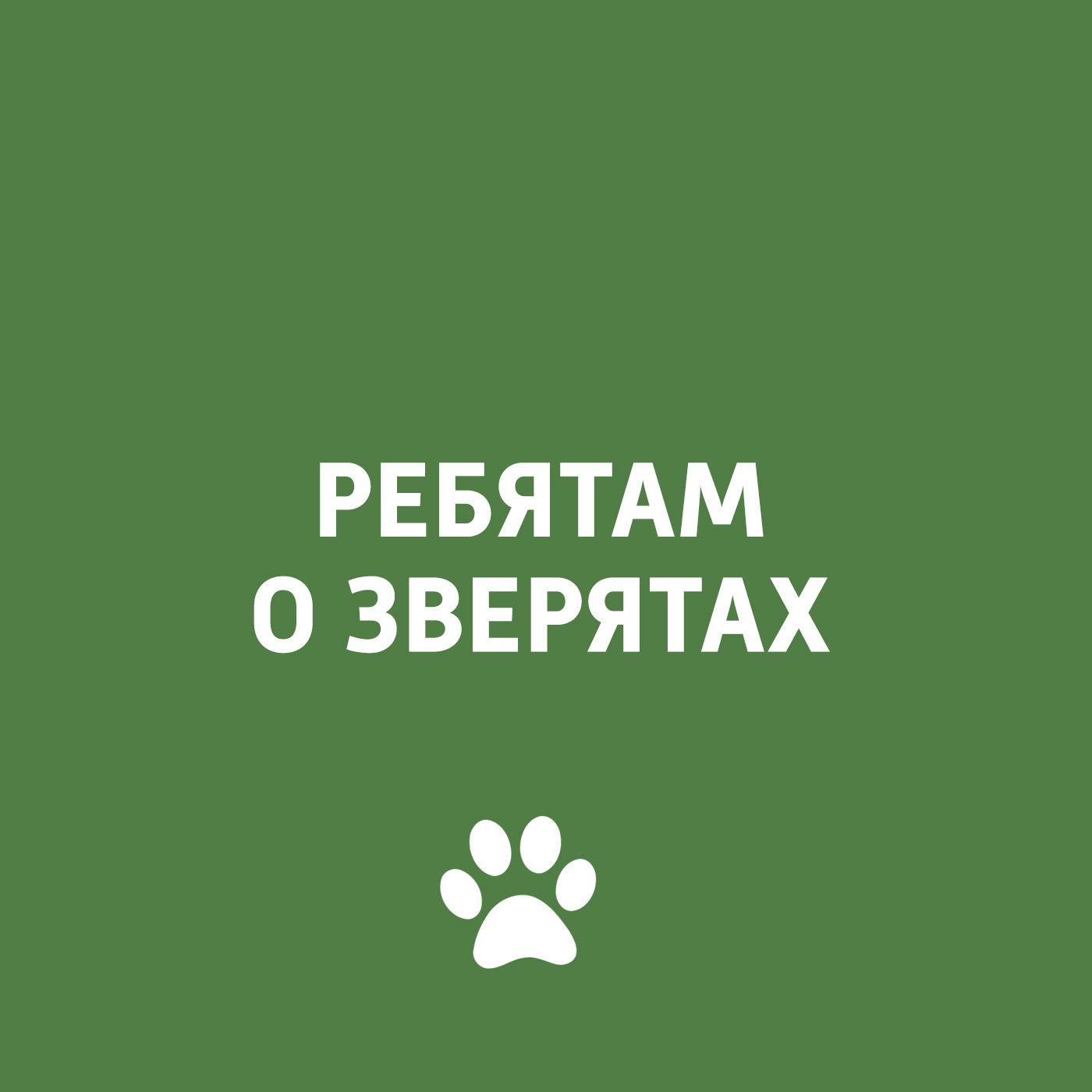 Творческий коллектив программы «Пора домой» Ребятам о зверятах: экзотические животные