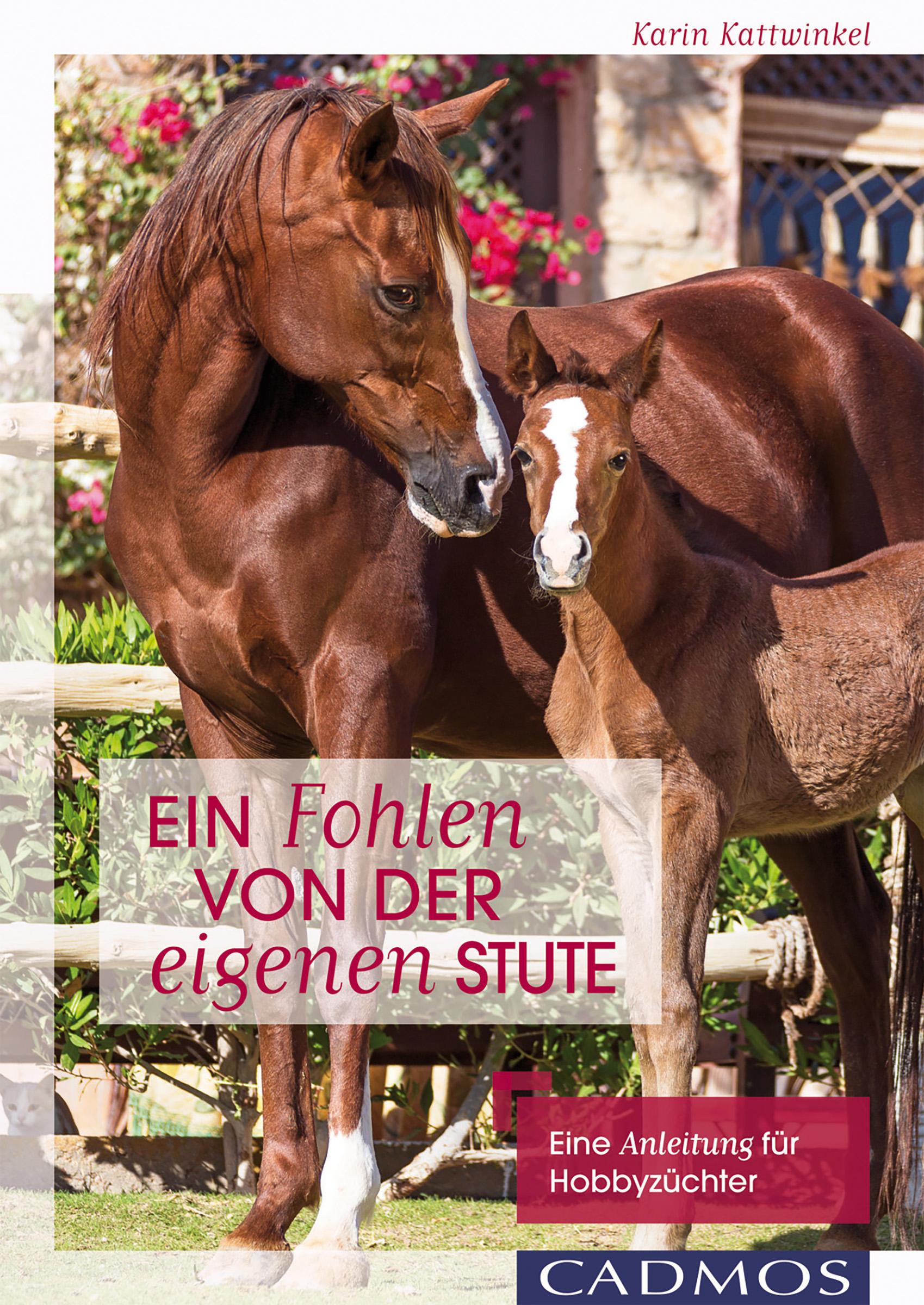 Karin Kattwinkel Ein Fohlen von der eigenen Stute karl von holtei ein trauerspiel in berlin