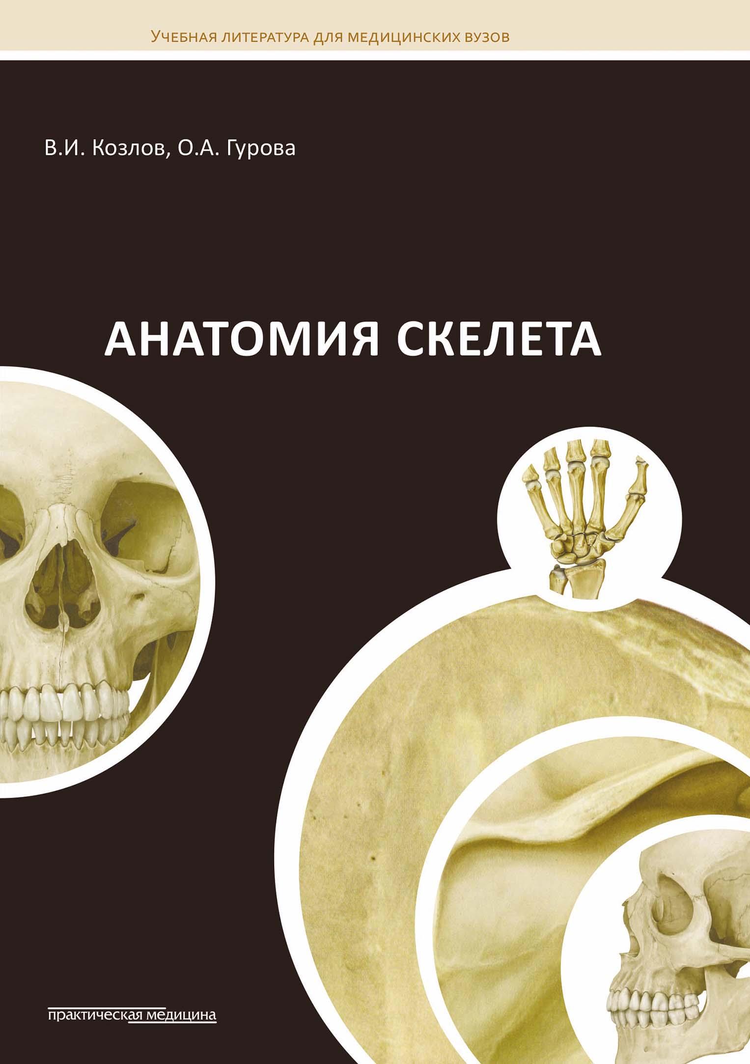 Ольга Гурова Анатомия скелета