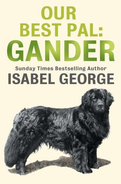 Фото - Isabel George Our Best Pal: Gander gander