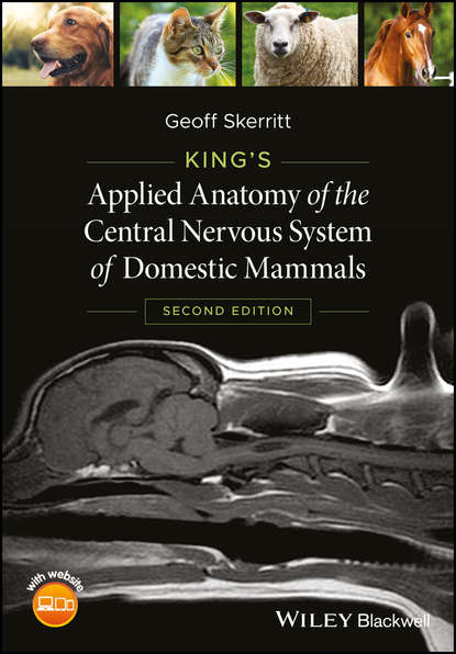Geoff Skerritt King's Applied Anatomy of the Central Nervous System of Domestic Mammals группа авторов transcription factors in the nervous system