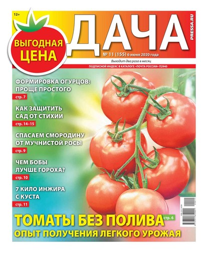 Дача Pressa.ru 11-2020