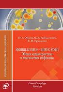 Morbillivirus – вирус кори. Общая характеристика и диагностика инфекции. Учебно-методическое пособие