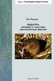 Ондатра: причины и следствия биологической инвазии