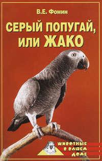 Серый попугай жако
