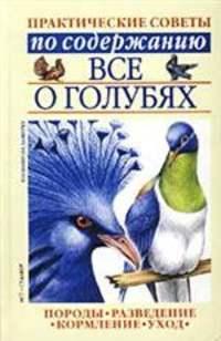 Все о голубях