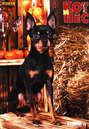 Электронная книга «Кот и Пёс №1/2018» –